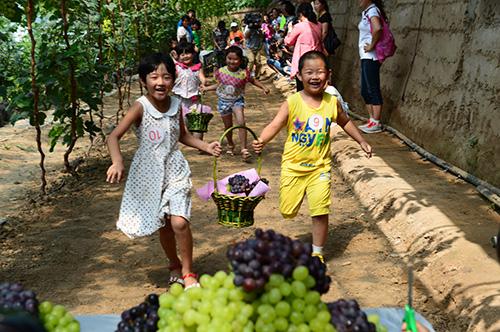 延庆镇第三届果蔬采摘节暨葡萄园开园仪式在孩子们的笑声中拉开帷幕
