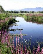 汉石桥湿地自然保护区位于京东平原地带,总面积1900 公顷,拥有北京市唯一的大型芦苇沼泽湿地,是全国科普教育基地、国家3A 级景区。景区内有鸟类153 种、植物292 种,动植物资源非常丰富。