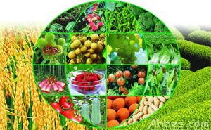 """围绕菜篮子,打造""""安全农业""""品牌    北京市农业局围绕菜篮子,打造""""安全农业""""品牌,主要包括:1.北京农业最核心的功能是提供优质、安全、有竞争性的肉禽蛋奶菜等农产品;2.农产品质量安全、重大动植疫病防控与民生息息相关,关系到首都稳定和人民健康,是大家关注的焦点。北京重点以设施蔬菜为切入点,从产业链源头的绿色防控,到生产过程的标准化,农产品质量安全监管体系建设、农产品质量安全的执法,及市场流通环节的质量安全检测,全方位展示北京""""安全农业""""品牌。3.现代化的装备、一条龙服务到位的农产品加工示范基地,在保障食品安全中发挥重要作用。"""