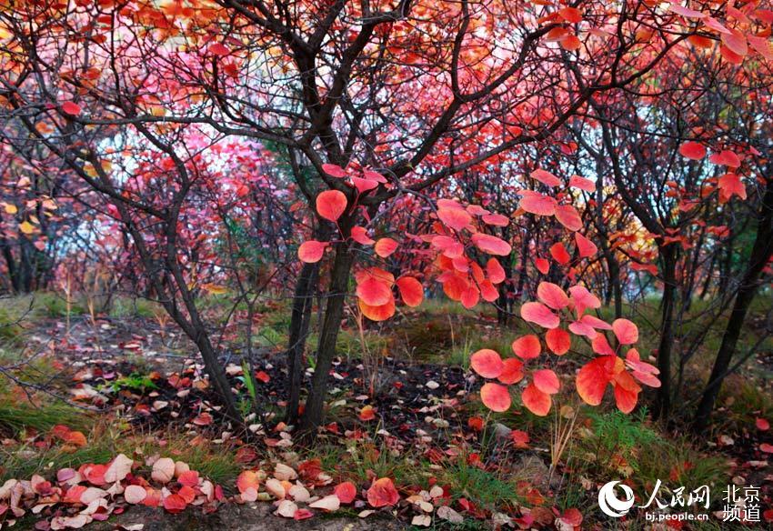 10月14日, 延庆燕山天池景区风景如画,水库周边群山层林尽染,一汪