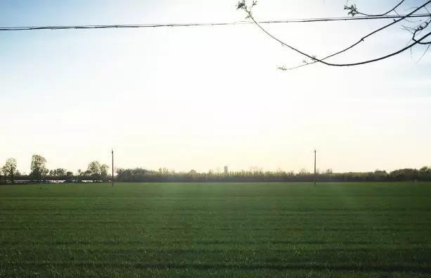 我们的田野
