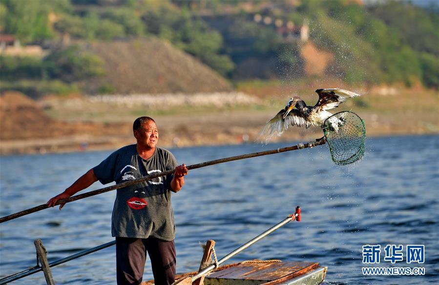 最后的鱼鹰捕鱼人