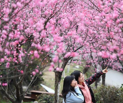 红梅吐蕊迎春来