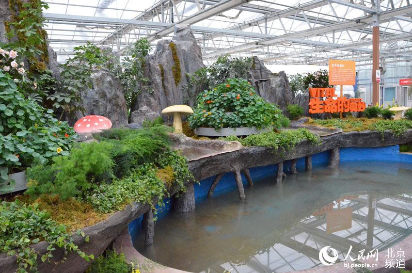 今天上午,第六届北京农业嘉年华在昌平区草莓博览园开幕,本届农业嘉年华将持续到5月13日。人民网尹星云 摄