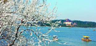 颐和园西堤山桃花盛开 众多游客踏春赏花
