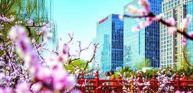 京城桃花盛放 春意盎然          近日,地铁西土城站附近的元大都城垣遗址公园内桃花盛放,春意盎然。