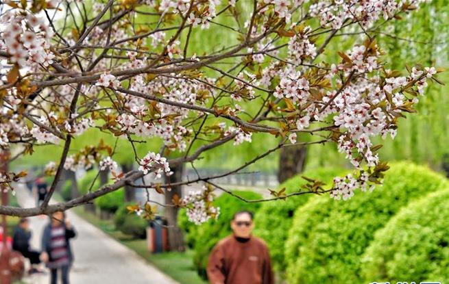 京城天气转暖 市民走到户外享受春天