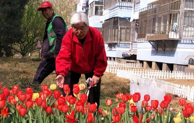 北京丰台居民认养社区绿地 美化居住环境