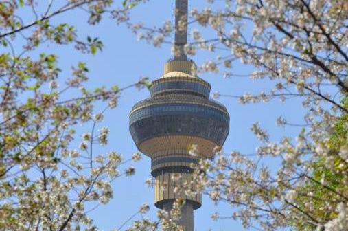 高清组图:玉渊潭樱花在春风中次第盛放