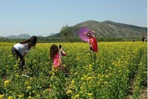 京郊十万亩花田百花盛开四季皆景