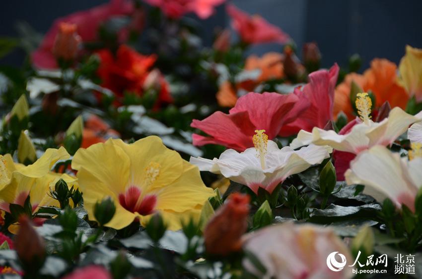 组图:2019世园会北京展品亮相世界花卉大观园