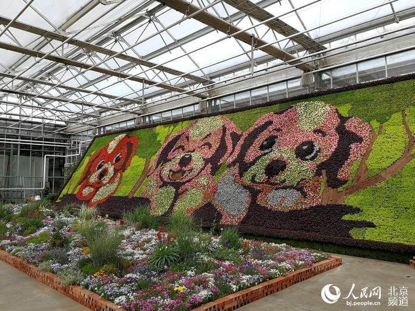 今天,第六届北京花木春季花展在北京国际鲜花港开幕,此次展览将持续到18日。人民网尹星云 摄