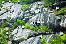 """密云""""崖壁蜂场""""首次割蜜 近日,北京密云区冯家峪镇西口外村附近的悬崖峭壁之上,养蜂人乘安全绳而下,采集悬崖上养殖的中华蜂蜂蜜。这是当地崖壁蜂场首次采收。 【详细】"""