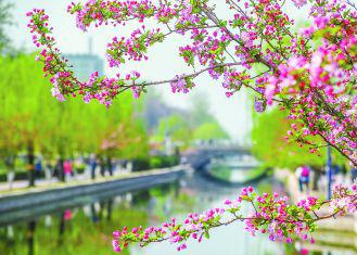 京城春正浓