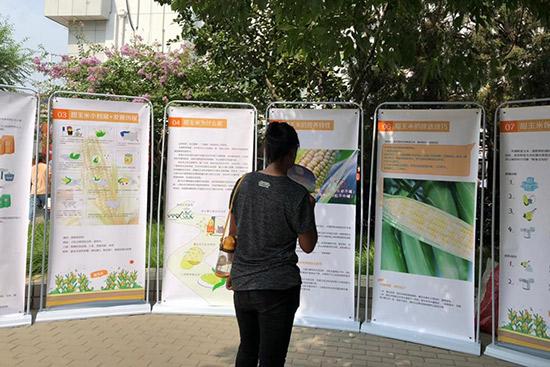鲜食玉米进社区白纸坊居民点赞优质农产品
