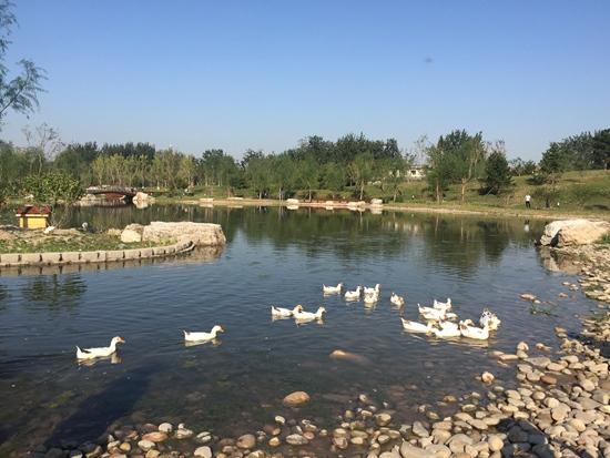 丰台新建百余个百姓公园 新增绿地面积百万平方米