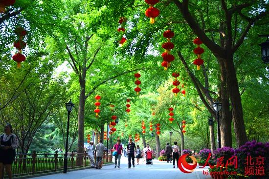 北京陶然亭公园近40万株花卉迎国庆