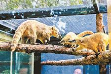 """动物园小型食肉动物搬""""新家"""""""