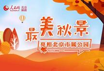 """一图带你了解北京20处最美秋景 受近期天气影响,北京市属各公园内白蜡、白桦、银杏、枫树等彩叶树种逐渐变色。记者从北京市公园管理中心获悉,20处""""多彩秋色""""观赏点已经进入观赏期,市民游客可错峰就近游览。【详细】"""