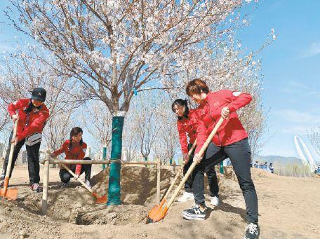 冬奥环境志愿者永定河滨植新绿