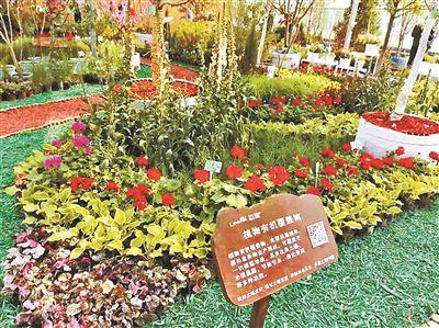 北京426种新优植物集中亮相可在微信小法子上预约观光